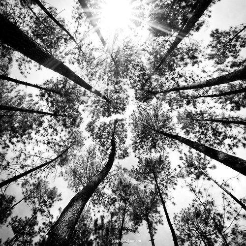 ronde d'arbres